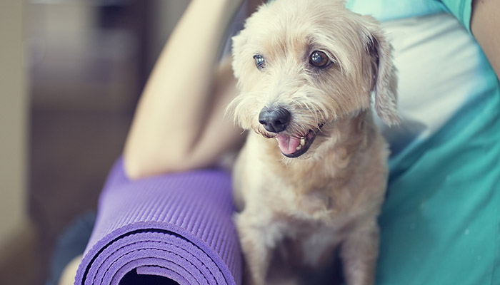 Doga - Yoga with Your Dog